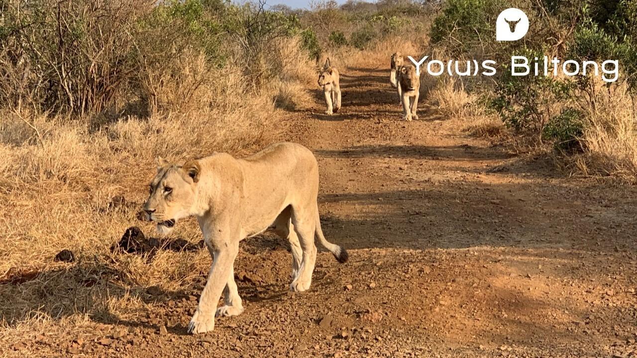 南アフリカ Vol. 05